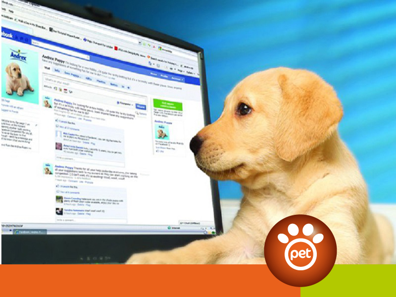 Pet Marketing - social