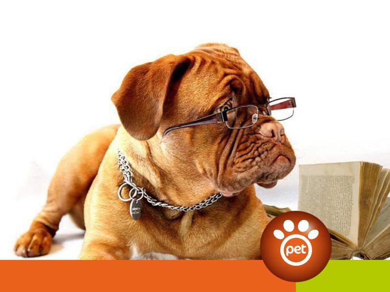 dogfather - 6 domande a 6 zampe
