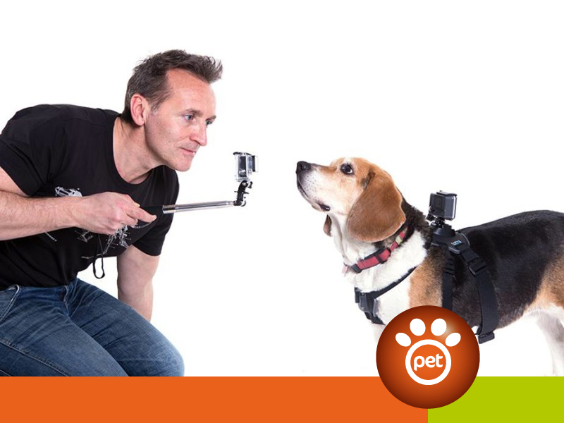 pet video marketing - racconta la tua azienda con un video