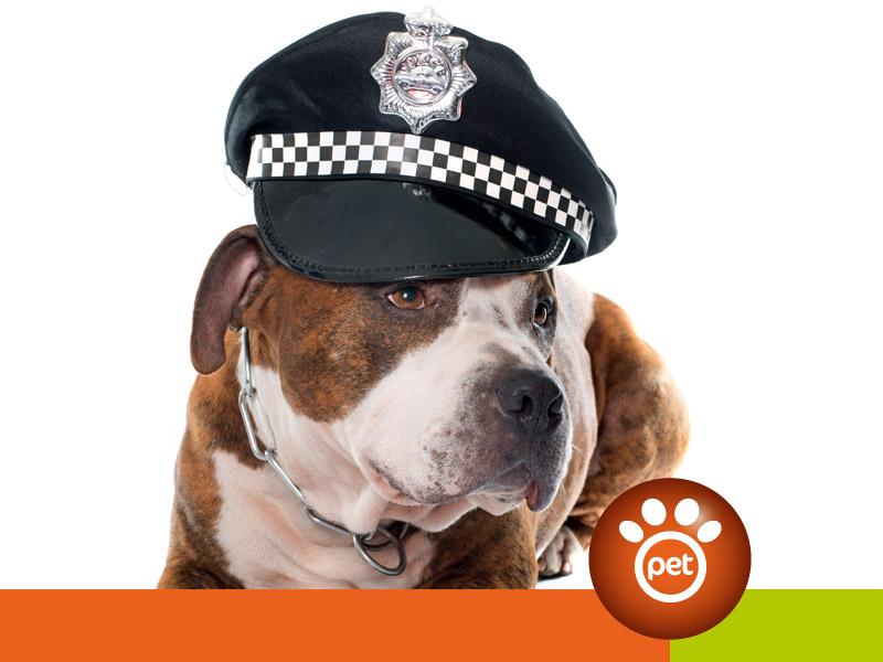 dogfather - legge e cani