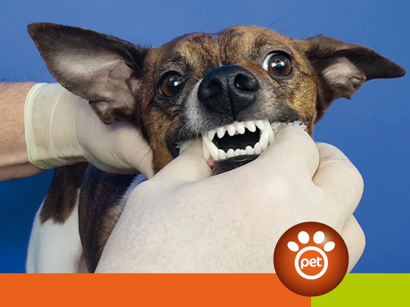 dogfather - prevenire parodontite cane