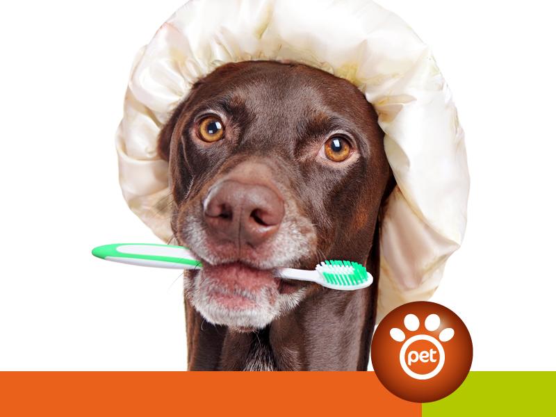 dogfather - igiene orale cane