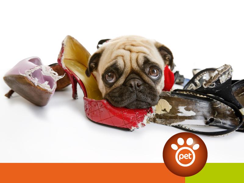 dogfather - comportamento e alimentazione cane