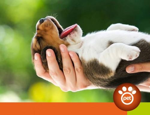 Pet Marketing: quando il prodotto non è tutto