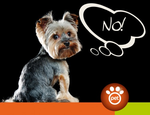 Pet Marketing: quando bisogna saper dire di no