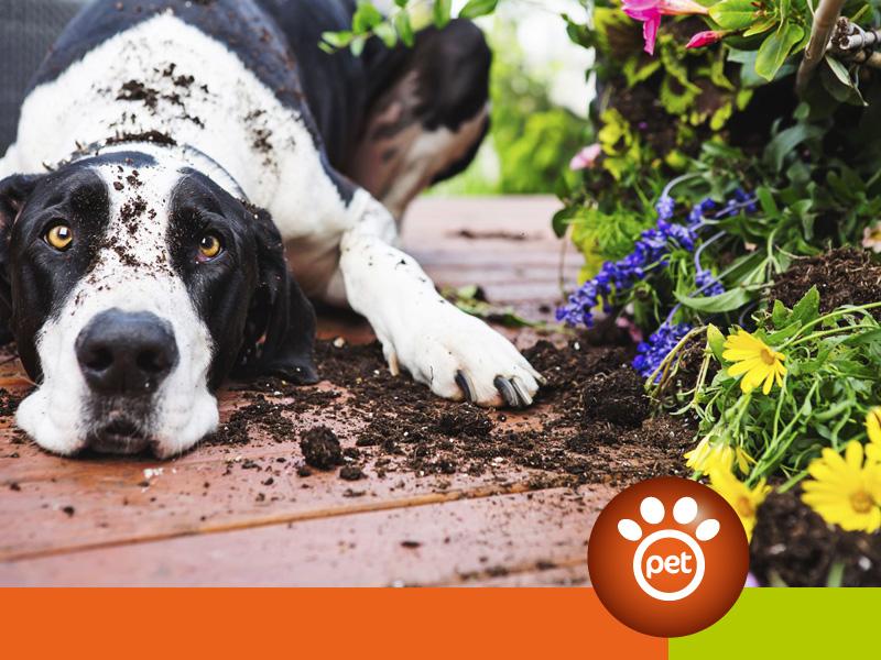 dogfather - in giardino lascia i nani e non i cani