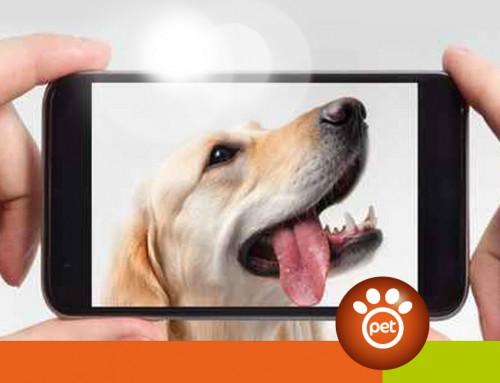 Il cellulare non è il migliore amico del cane
