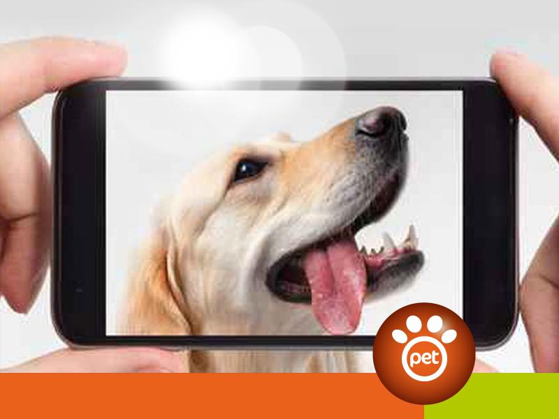 dogfather - cellulare nemico del cane