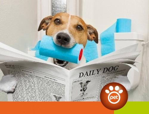 Come leggere la cacca del tuo cane