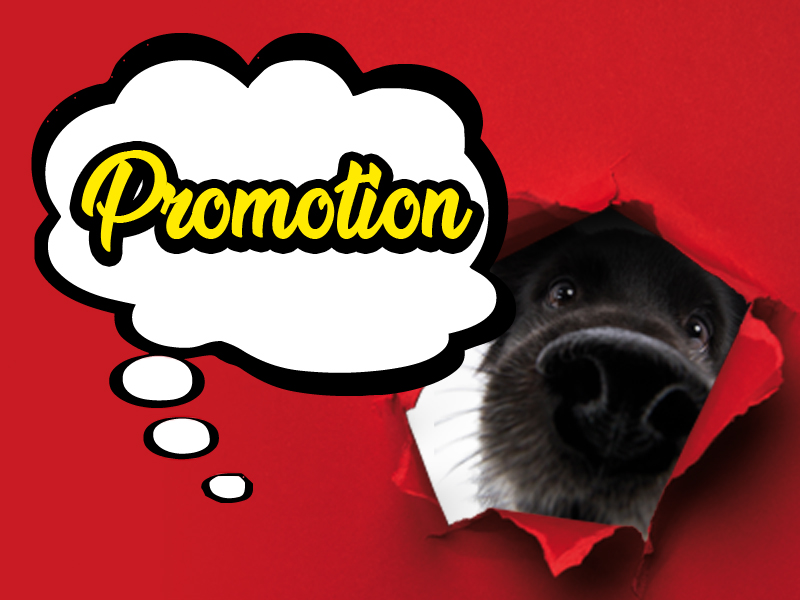 promotion - massimiliano morengo