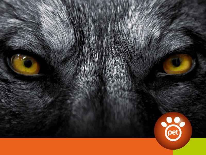 petmarketing - black pet friday 2020