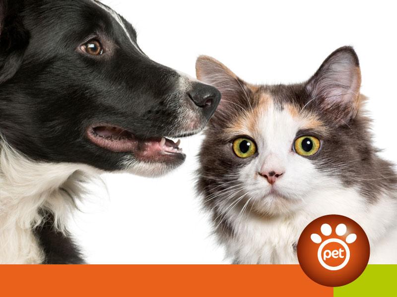 Pet Referral Marketing