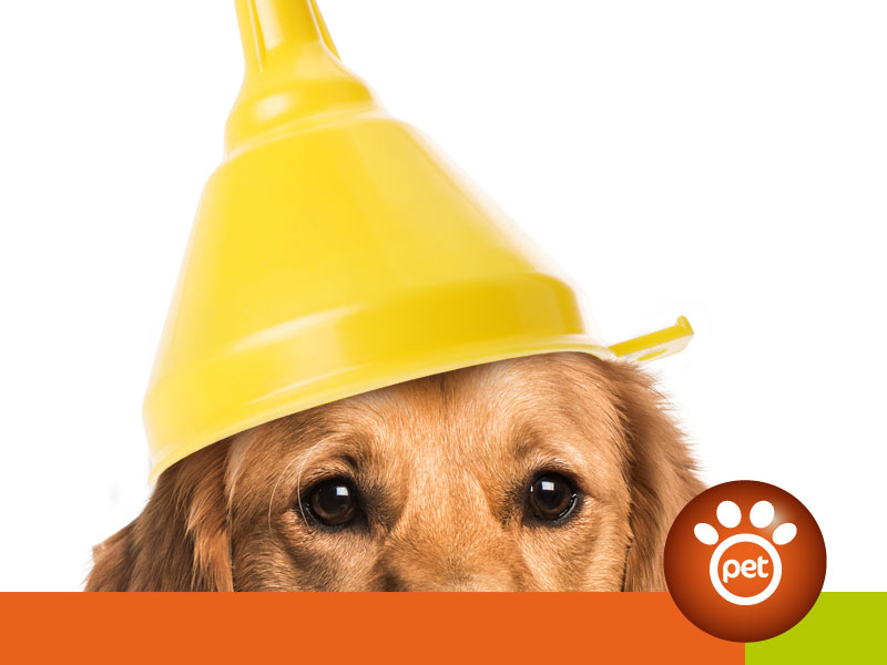 Pet Funnel Marketing