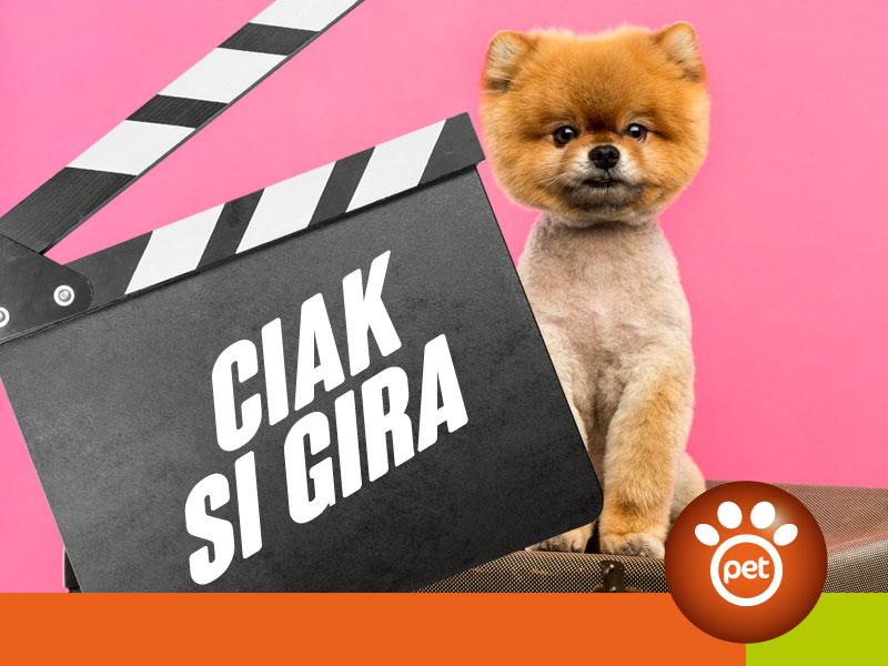 Pet Video Marketing