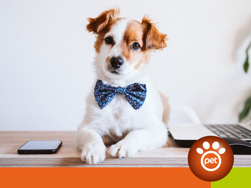 pet marketing - assistenza clienti