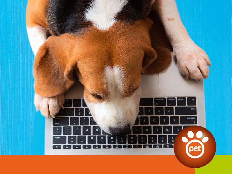 pet marketing e blog di e-commerce