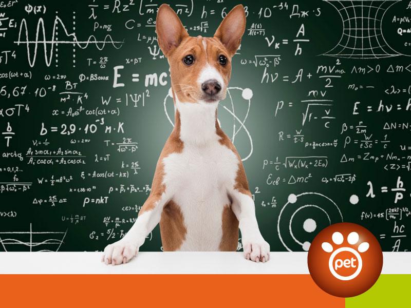 Pet Marketing - KPI