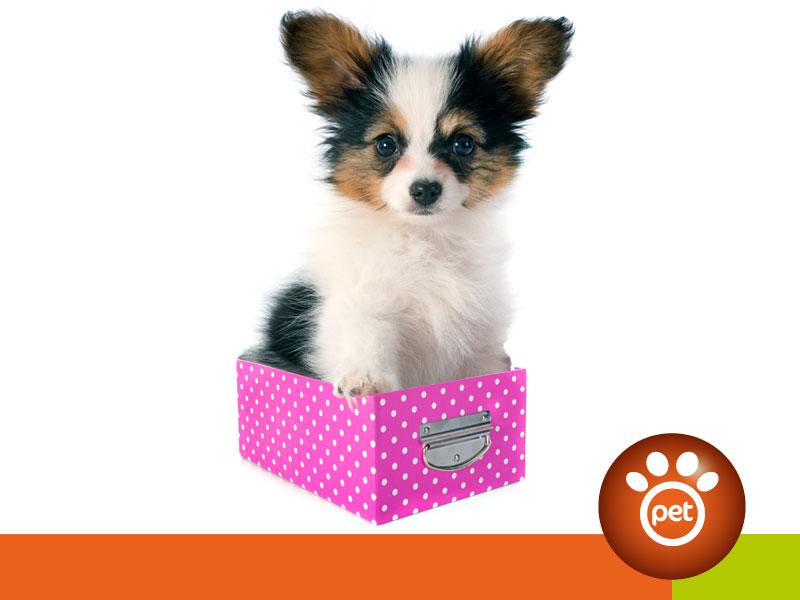 petmarketing - packaging