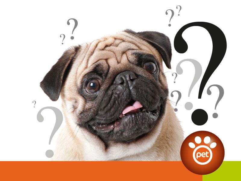 Pet Marketing - le criticità della vendita online